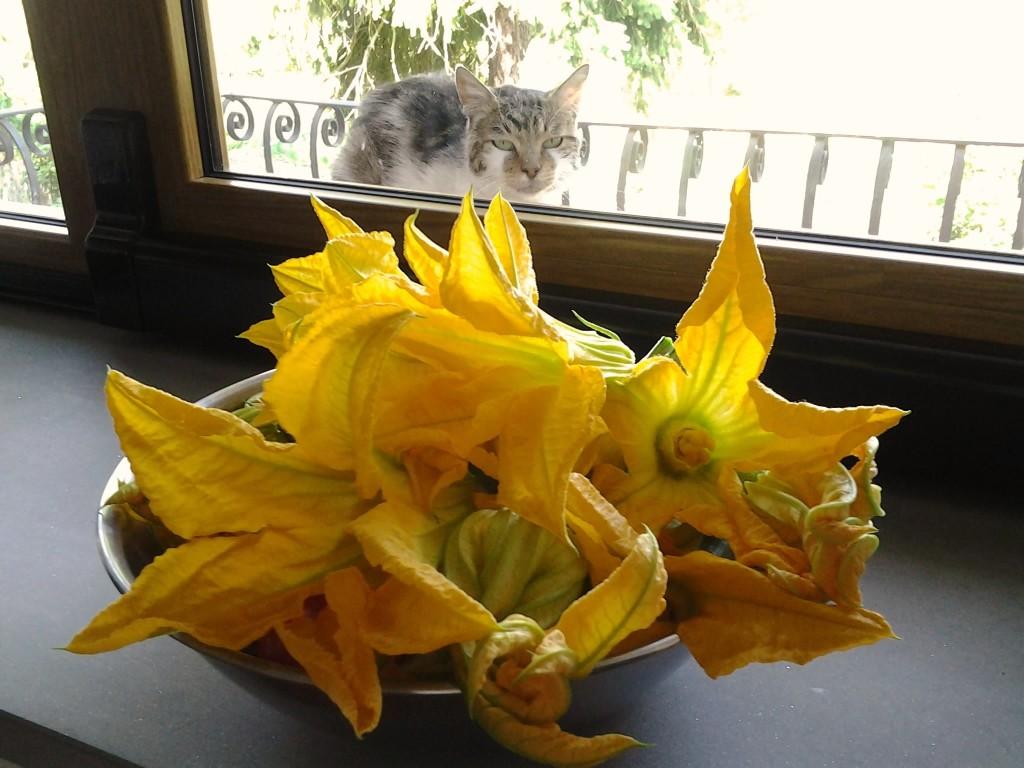 Fiori di Zucchine e 8