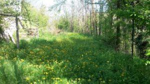 campo-di-tarassaco
