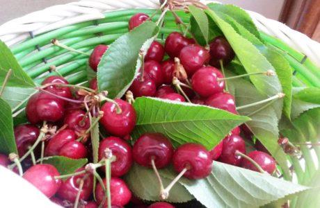 Ciliegie 460x300 cherries