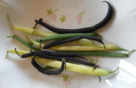 Fagiolini Tricolor 2 460x300 Green Black Yellow Beans