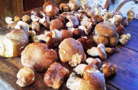 Funghi 460x300 Mushrooms