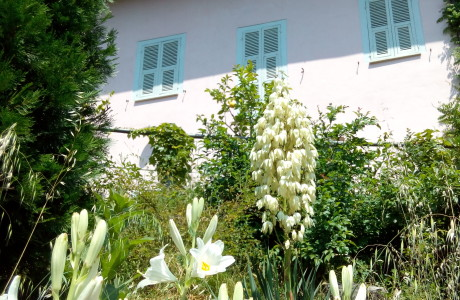 Gigli 460x300 Lilies