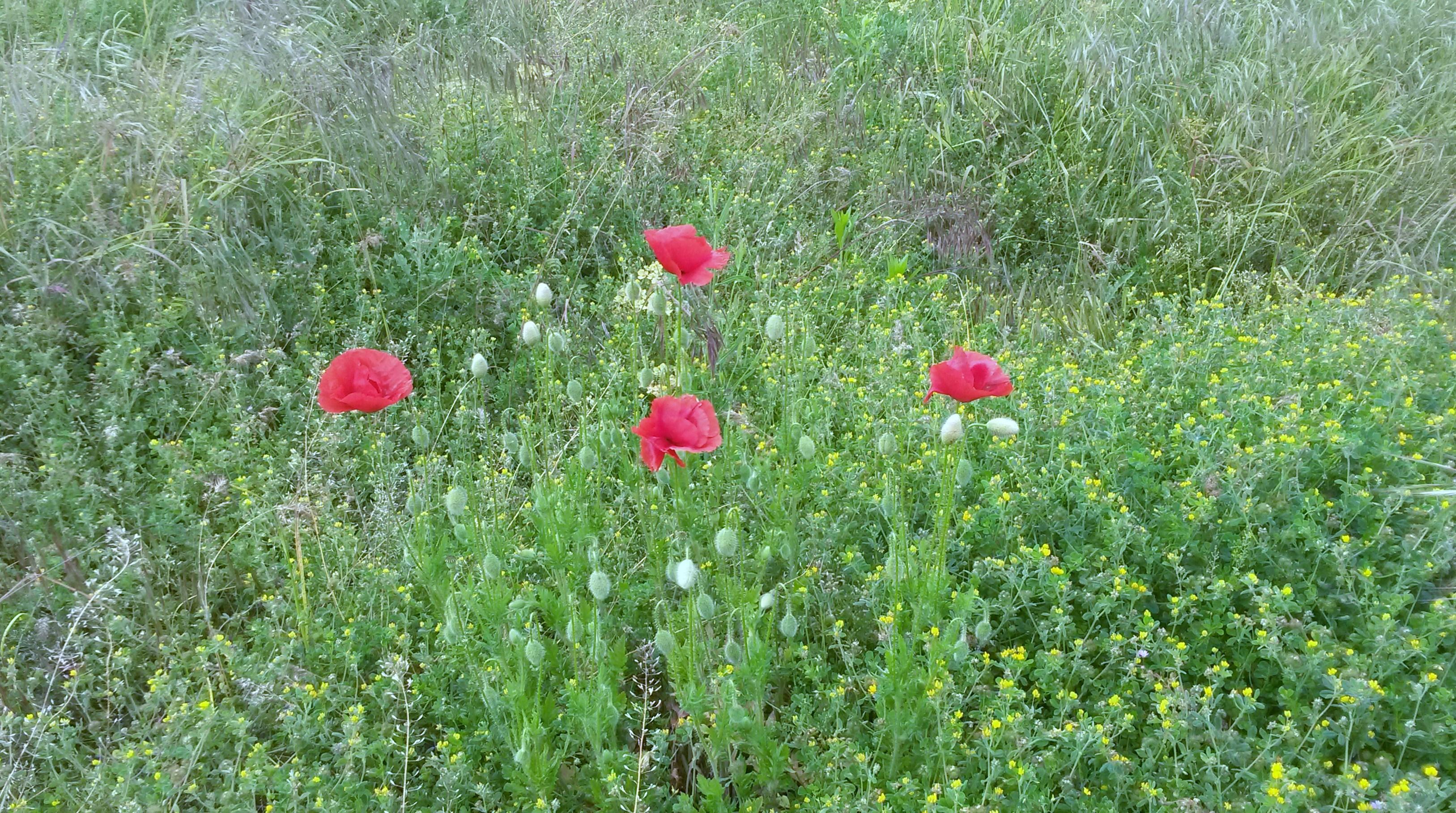 L orto giardino di villa cheti villa cheti - L orto in giardino ...