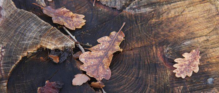 La quercia di Villa Cheti 700x300 I benefici dell 8217 autunno