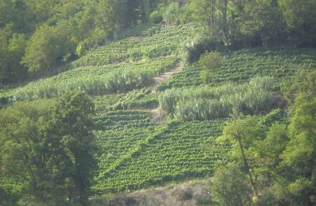 Langhe 1 2 Inside Link Le stagioni del Borgo 460x300 Vineyards and reeds