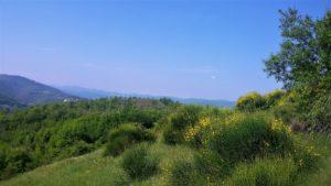 paesaggio-con-ginestre