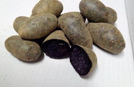 Patate Viola 460x300 purple potatoes