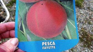 Pesca Fayette