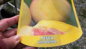 Pesca limonina