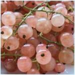 Ribes Gloire du Sablon