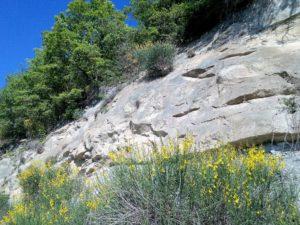 rocce-e-fiori