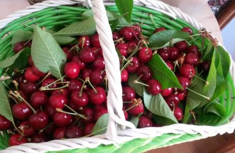 Sweet Ciliegie 460x300 Cherries