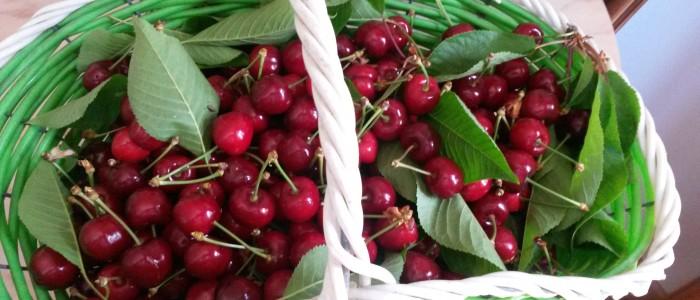 Sweet Ciliegie 700x300 Una decina di cose da sapere sulle ciliegie