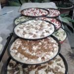Villa Cheti pizzas