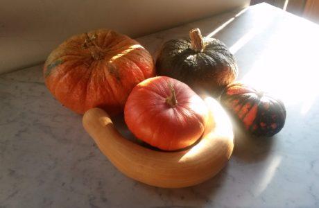 Zucche abbracciate 460x300 Pumpkins 8217 hug