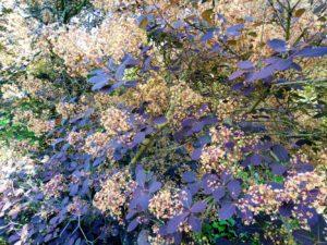 albero cancelletto 300x225 I Colori di Villa Cheti