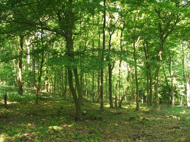 bosco 2 Il Bosco parla