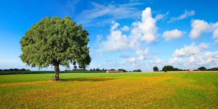 campagna italiana Evviva i contadini
