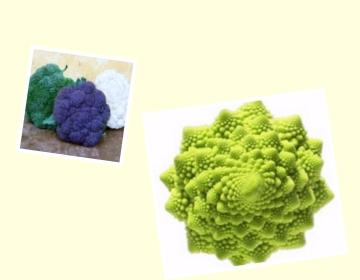 cavolo broccolo Fotor Collage Capitolo 2 Cavoli e quanto bene fanno soprattutto se 8220 ognuno si fa i propri 8221