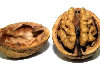 cervellonoce 320x210 Brain saving foods