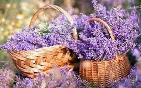 cesti lavanda Aromaterapia