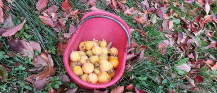 cesto di cachi 700x300 Le ricette tonificanti per un autunno al top