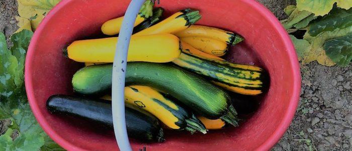 cesto di zucchine 700x300 Caponata di zucchine ed altre idee
