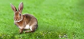 coniglietto E fu il primo coniglio 8230 Il pianeta inabitabile