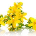 fiore di iperico 150x150 Des fleurs notre bien tre et beaut