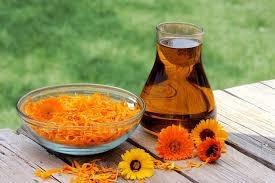 fiori e olio I poteri 8220 magici 8221 del fiore di Calendula 8230 solo leggende