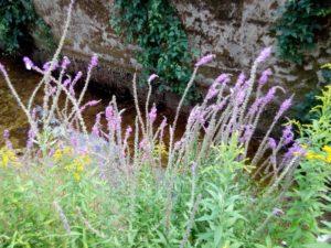 fiori-sul-greto
