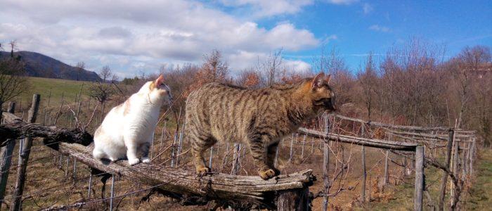 gatto sulla topia che scotta 700x300 I gatti sulla topia 8230 8230 che scotta 8230 aspettando la primavera