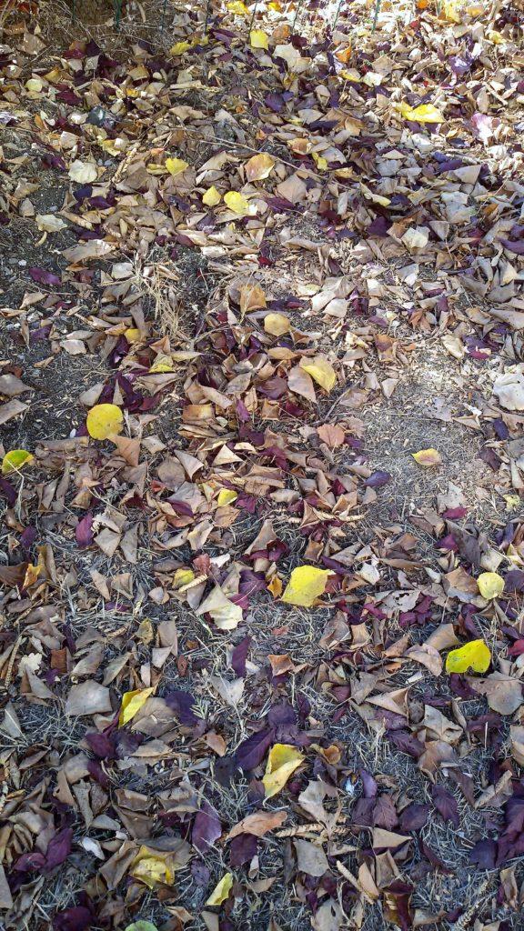 le foglie in autunno 576x1024 Che autunno particolare