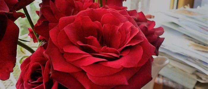 le rose di luglio 700x300 I profumi di Villa Cheti