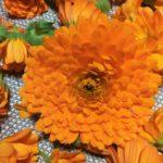 ma sar grande 150x150 Des fleurs notre bien tre et beaut