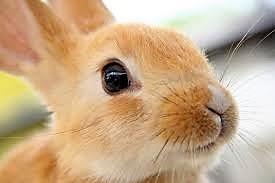 musetto E fu il primo coniglio 8230 Il pianeta inabitabile