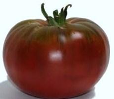 nero crimea Che buono il sugo dei pomodori dell 8217 orto