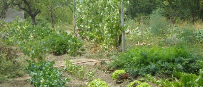 orto 2 700x300 Sinergie in agricoltura l 8217 orto
