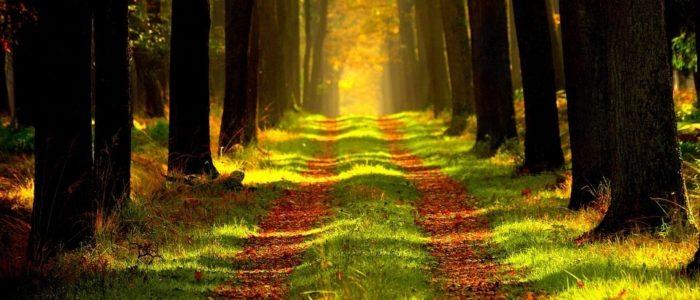 piano forestale piemonte 700x300 Il Bosco parla