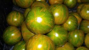 pomodori verdi 300x169 Evviva la salsa di pomodoro 8230 verde