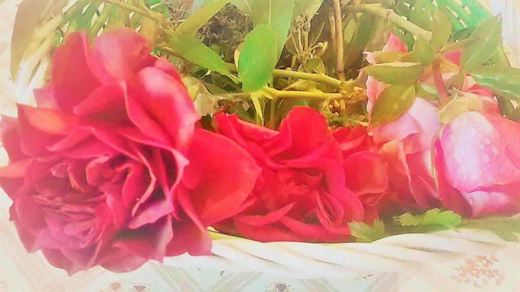 rose di ottobre 1024x576 Il Natale si avvicina