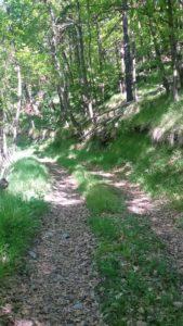 sentiero-ombreggiato