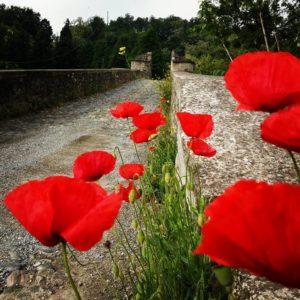 serena marchisio spigno con ponte e papaveri 300x300 No l approche ainsi que le bien connu 8220 Panettone d 8217 Autore 8221 Spigno Monferrato