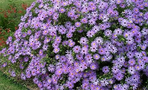 settembrini Il fascino dei fiori