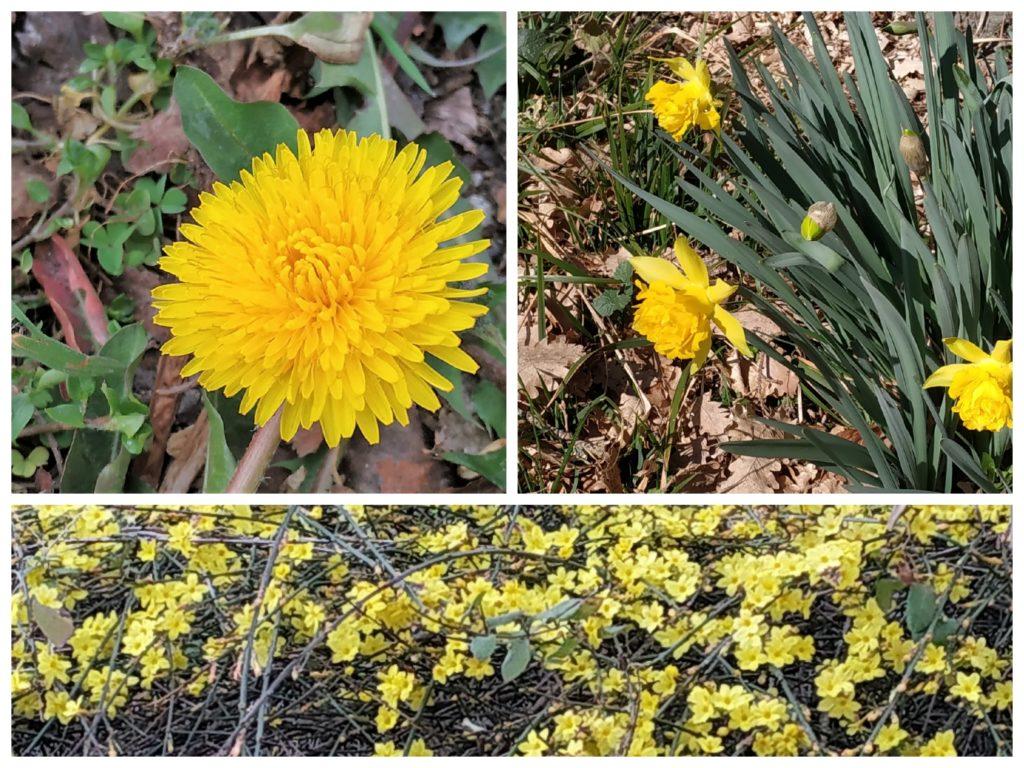 tarassaco iris gelsomino cinese 1024x768 8 Marzo Festa della Donna